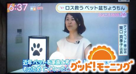テレビ朝日「グット!モーニング」にディアペットの盆提灯が紹介されました